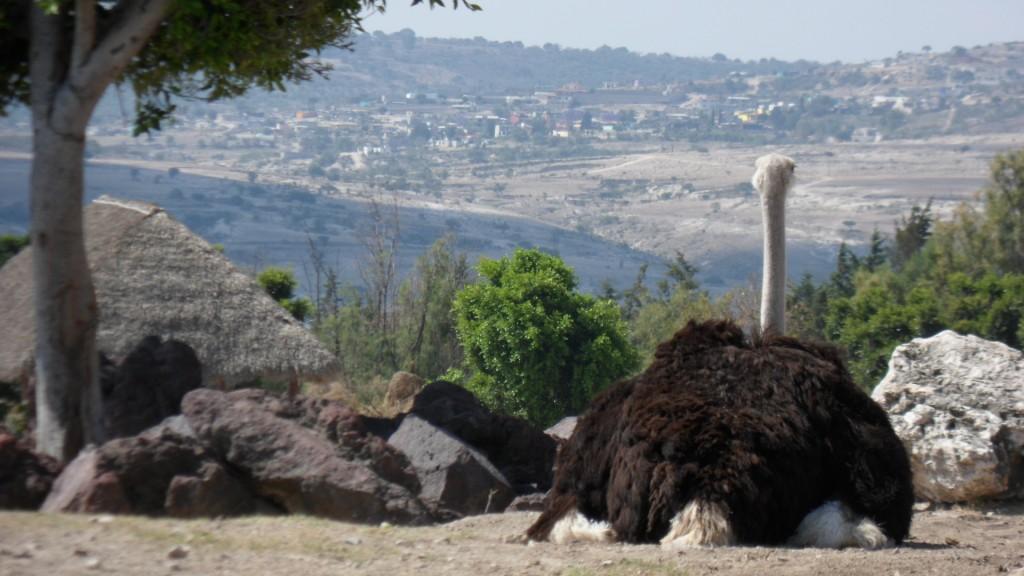 africam safari puebla mexico pata de perro 7