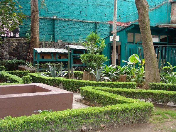 jardines museo leon trotsky coyoacan df mexico pata de perro 6.JPG