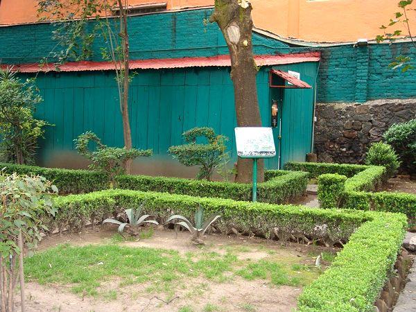 jardines museo leon trotsky df mexico pata de perro 7.JPG