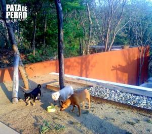casa mermejita mazunte oaxaca mexico pata de perro blog de viajes2