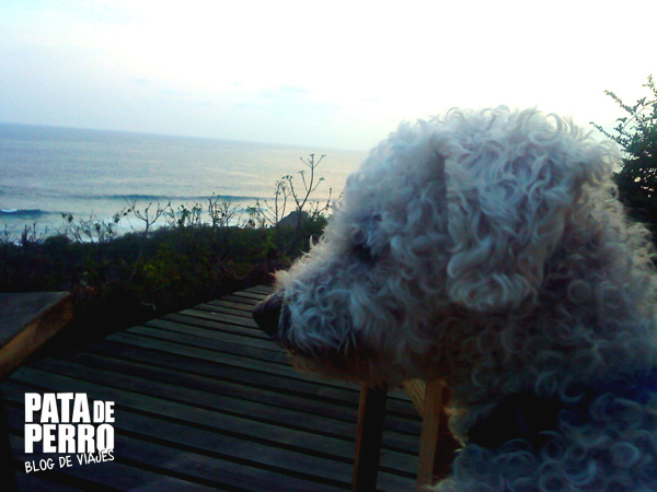 casa mermejita mazunte oaxaca mexico pata de perro blog de viajes4