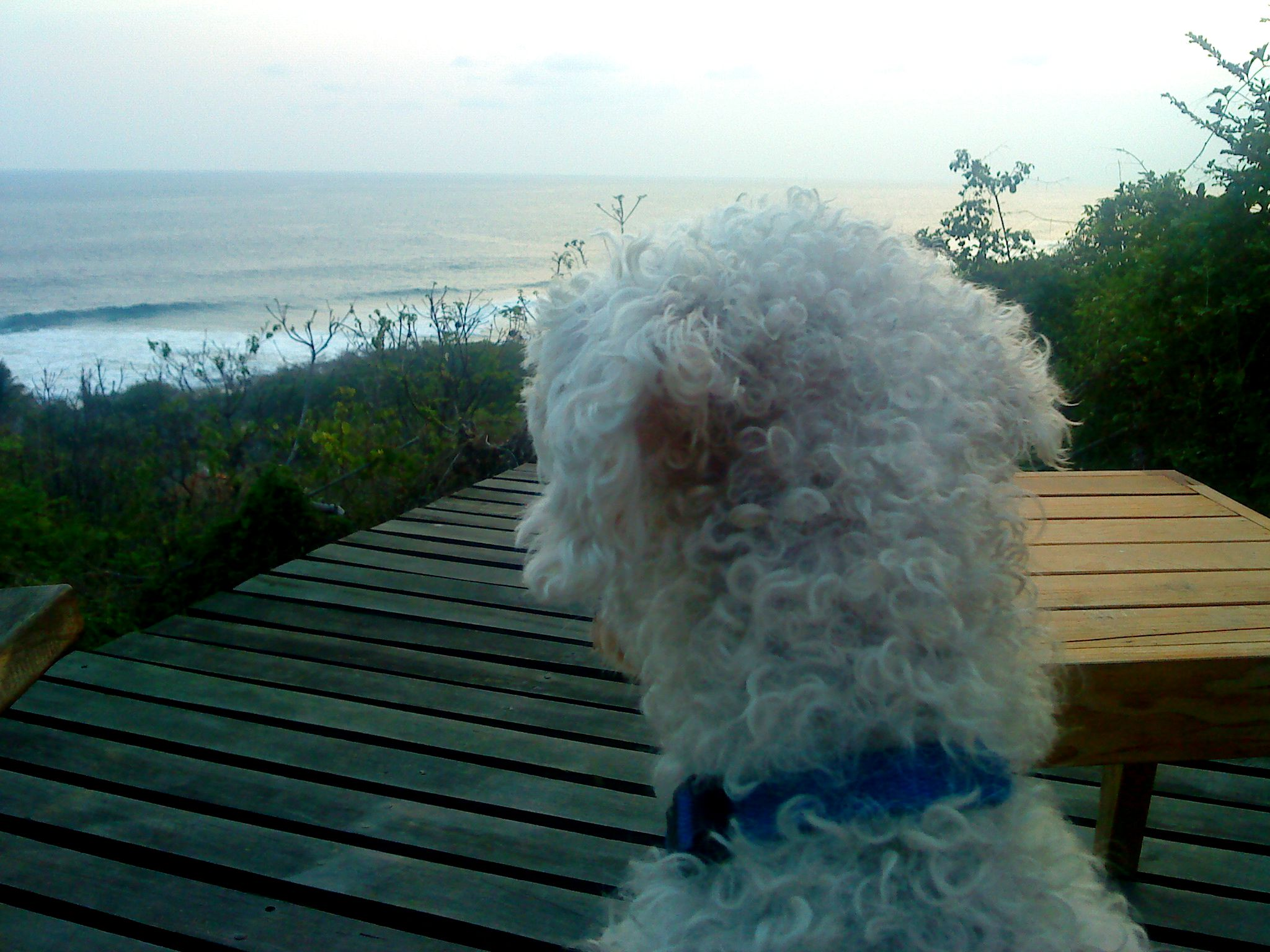casa mermejita mazunte oaxaca mexico pata de perro blog de viajes5