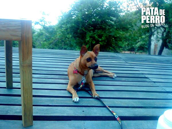 casa mermejita mazunte oaxaca mexico pata de perro blog de viajes6
