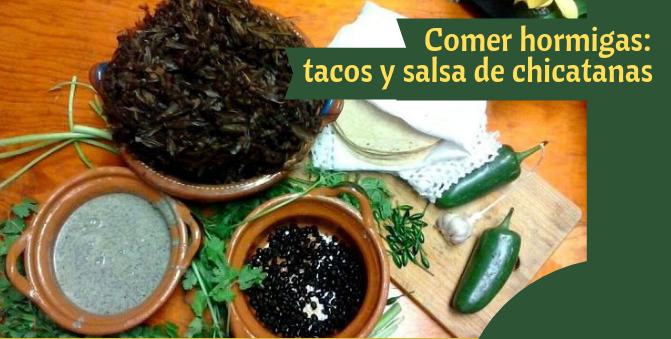 Comer hormigas: tacos y salsa de chicatanas