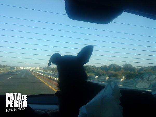 pet friendly pata de perro blog de viajes mexico