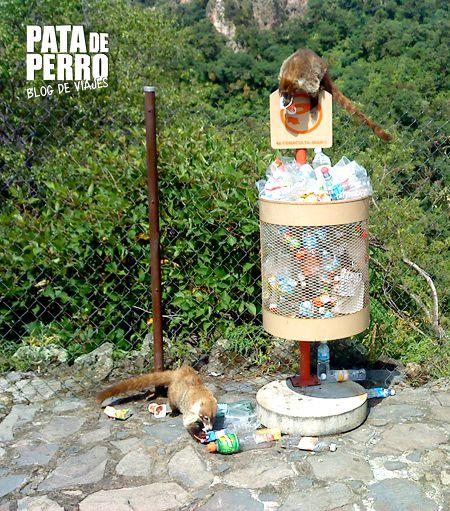 tepozteco tepoztlan morelos mexico basura pata de perro blog de viajes