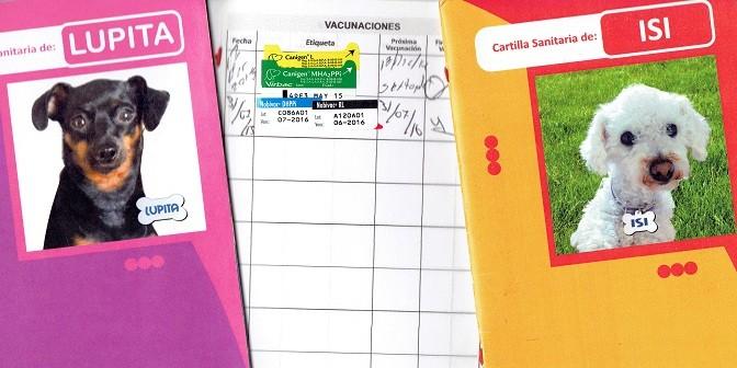 Perros: cómo leer las etiquetas de las vacunas