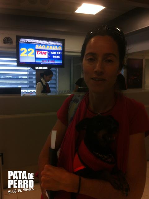viajar con perros en cabina del avion pata de perro blog de viaje mexico 09