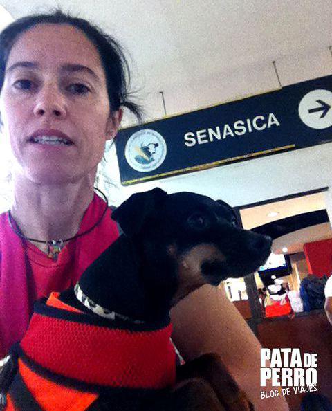 viajar con perros en cabina del avion pata de perro blog de viajes 03.JPG