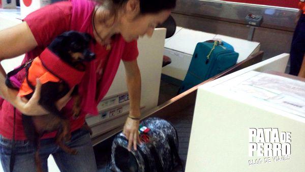 viajar con perros en cabina del avion pata de perro blog de viajes mexico 05.JPG