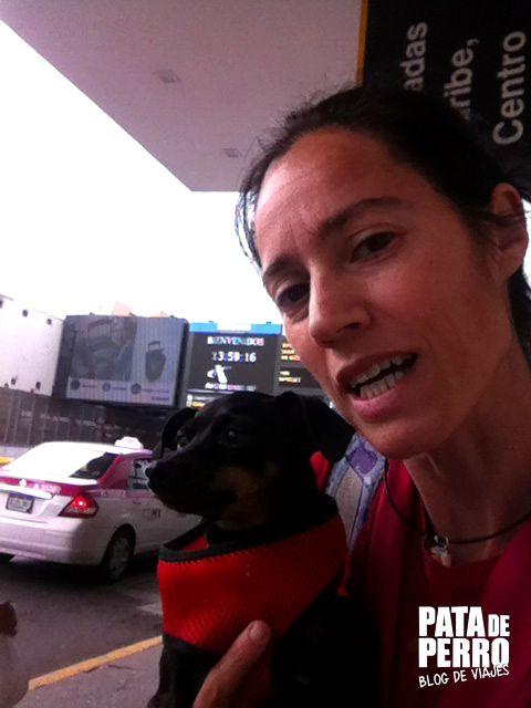 viajar con perros en cabina del avion pata de perro blog de viajes03.JPG