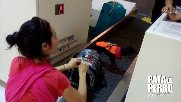viajar con perros en la cabina del avion pata de perro blog de viajes mexico 06.JPG