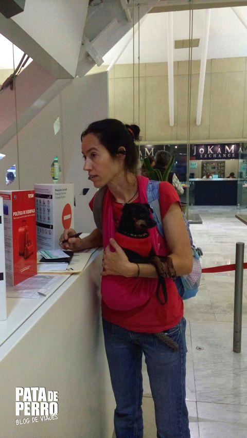 viajar con perros en la cabina del avion pata de perro blog de viajes mexico04.JPG
