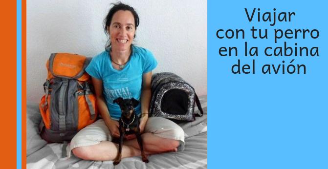 Viajar con perros en la cabina del avión fuera de México (Parte 1: Trámites)