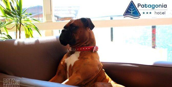 Francesco, el perro anfitrión de Patagonia Hotel