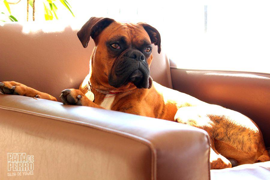 francesco patagonia hotel pata de perro blog de viajes argentina bariloche07