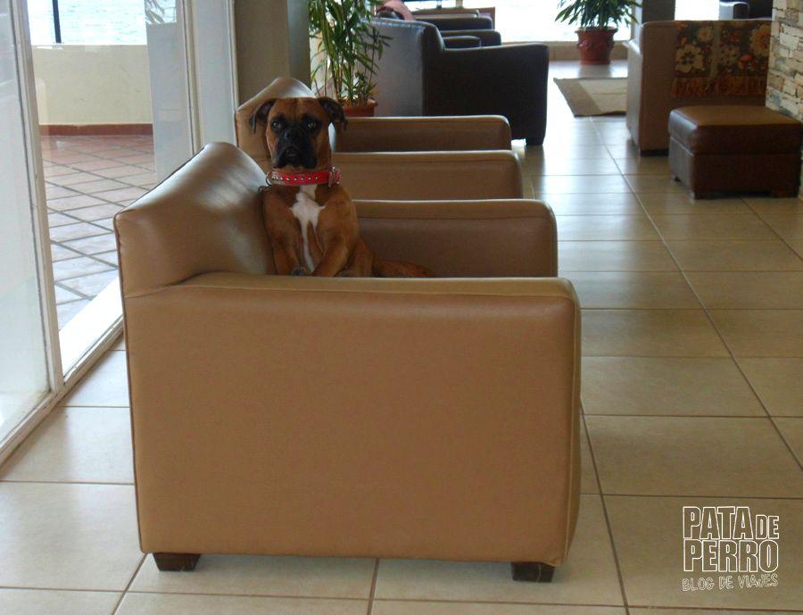 hotel patagonia bariloche argentina pata de perro blog de viajes17