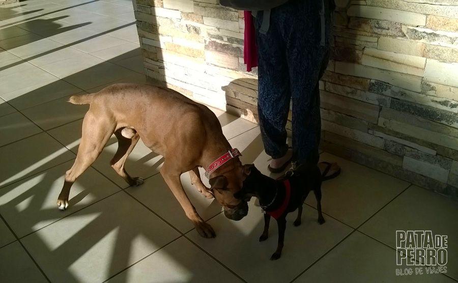 hotel patagonia bariloche argentina pata de perro blog de viajes18