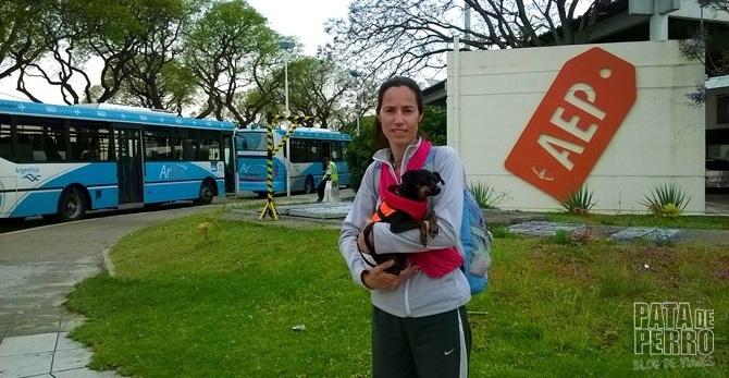Viajar con perros en cabina del avión dentro de Argentina