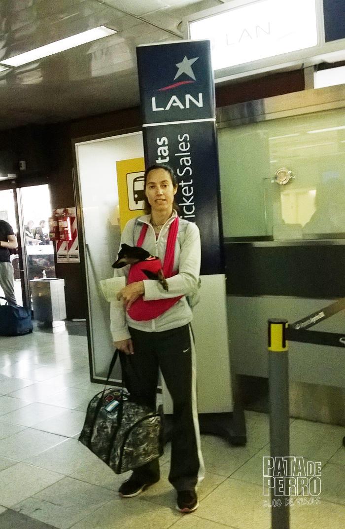 viajar con perros en cabina avion argentina pata de perro blog de viajes3
