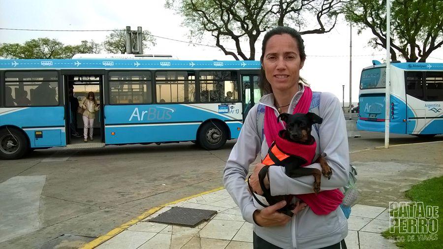 viajar con perros en avion fuera de argentina pata de perro blog de viajes10