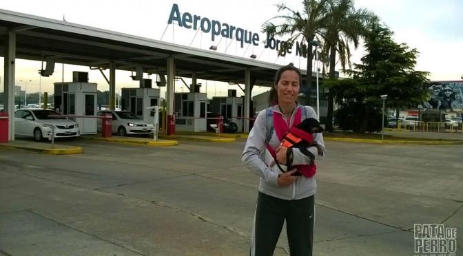 Viajar con perros en la cabina del avión fuera de Argentina (Parte 2: El día del vuelo)