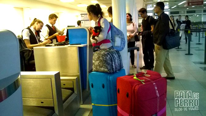 viajar con perros en cabina de avion fuera de argentina pata de perro blog de viajes