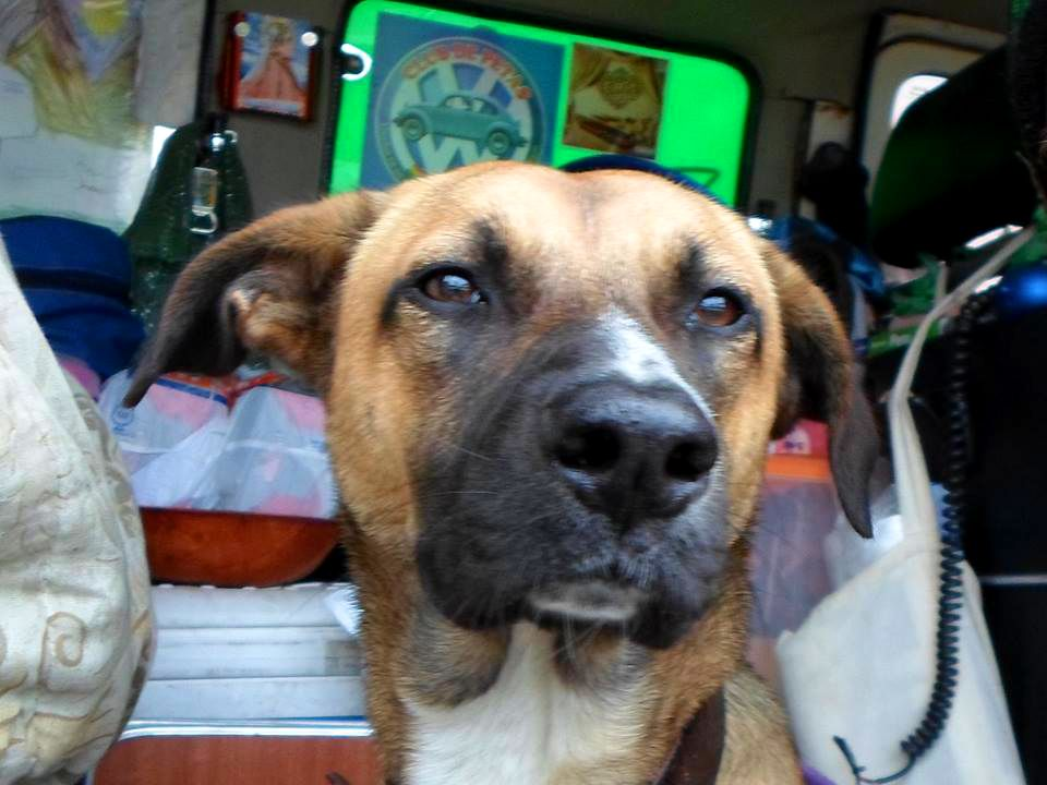 de las calles de lima a la aventura por toda america pata de perro blog de viajes trompa y claudio01