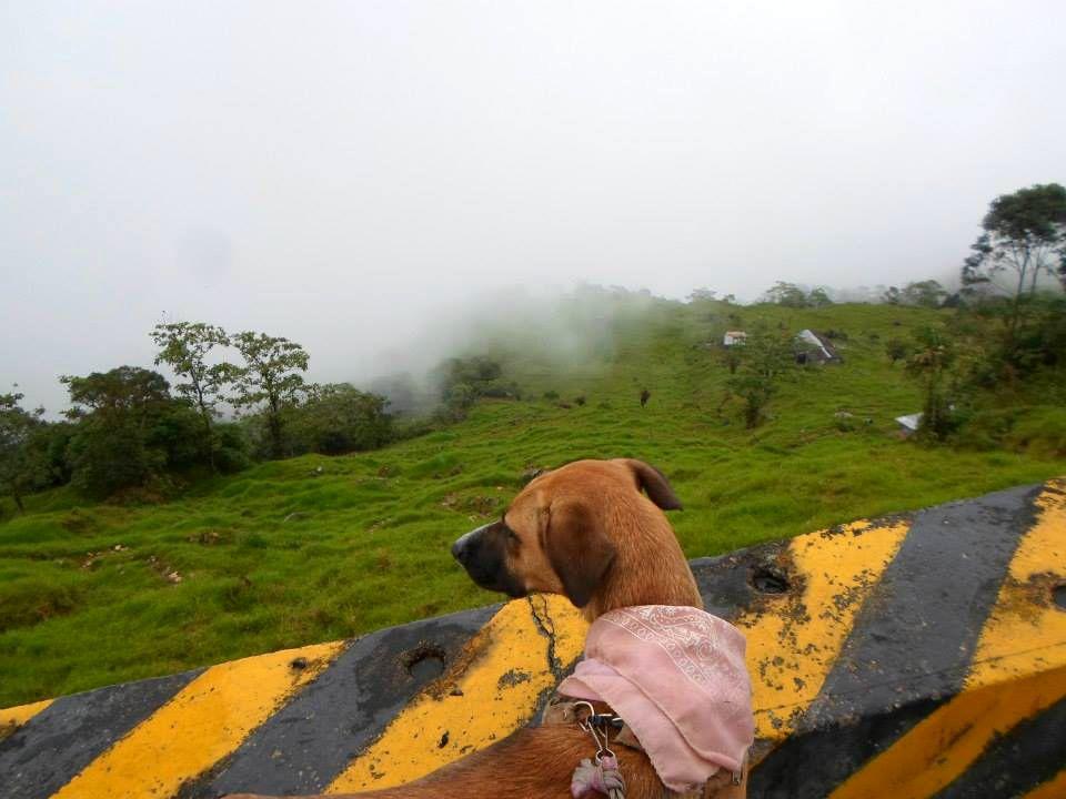 de las calles de lima a la aventura por toda america pata de perro blog de viajes trompa y claudio05
