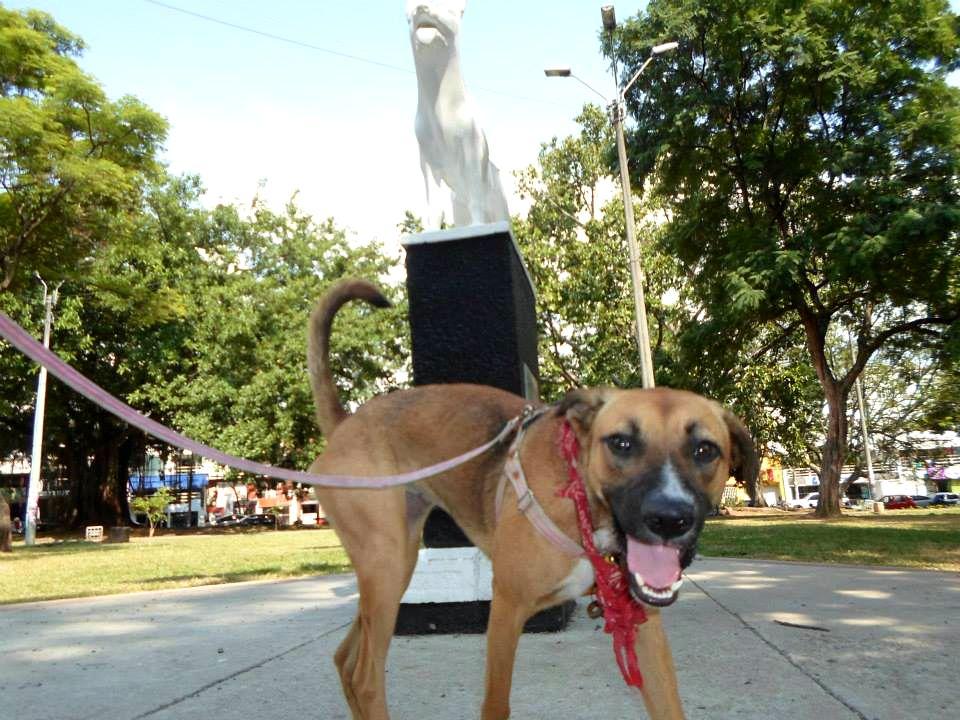 Monumento al can Teddy, Cali, Colombia
