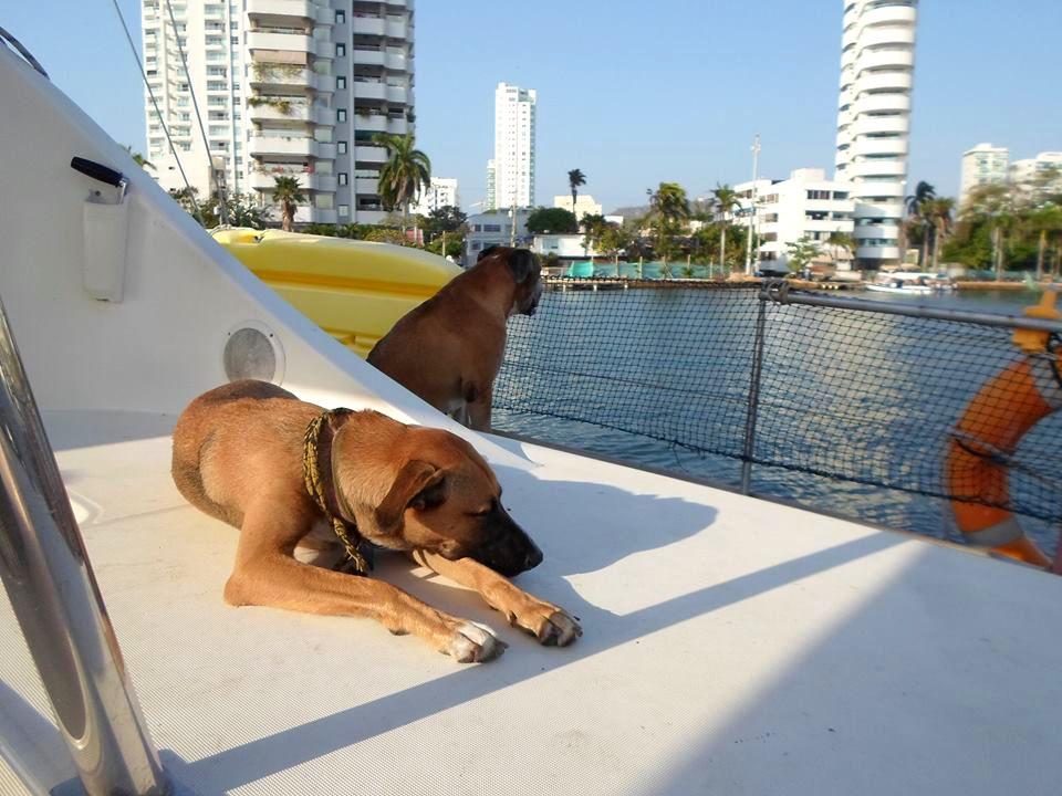 Trompa en velero y en buena compañía