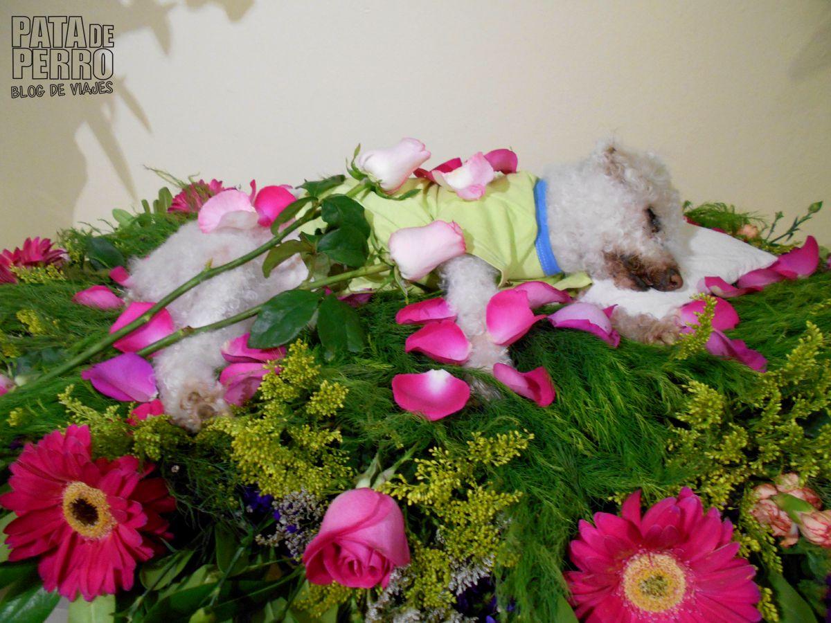 memorial friends 01 pata de perro blog de viajes servicios funerarios mascotas perros puebla mexico08