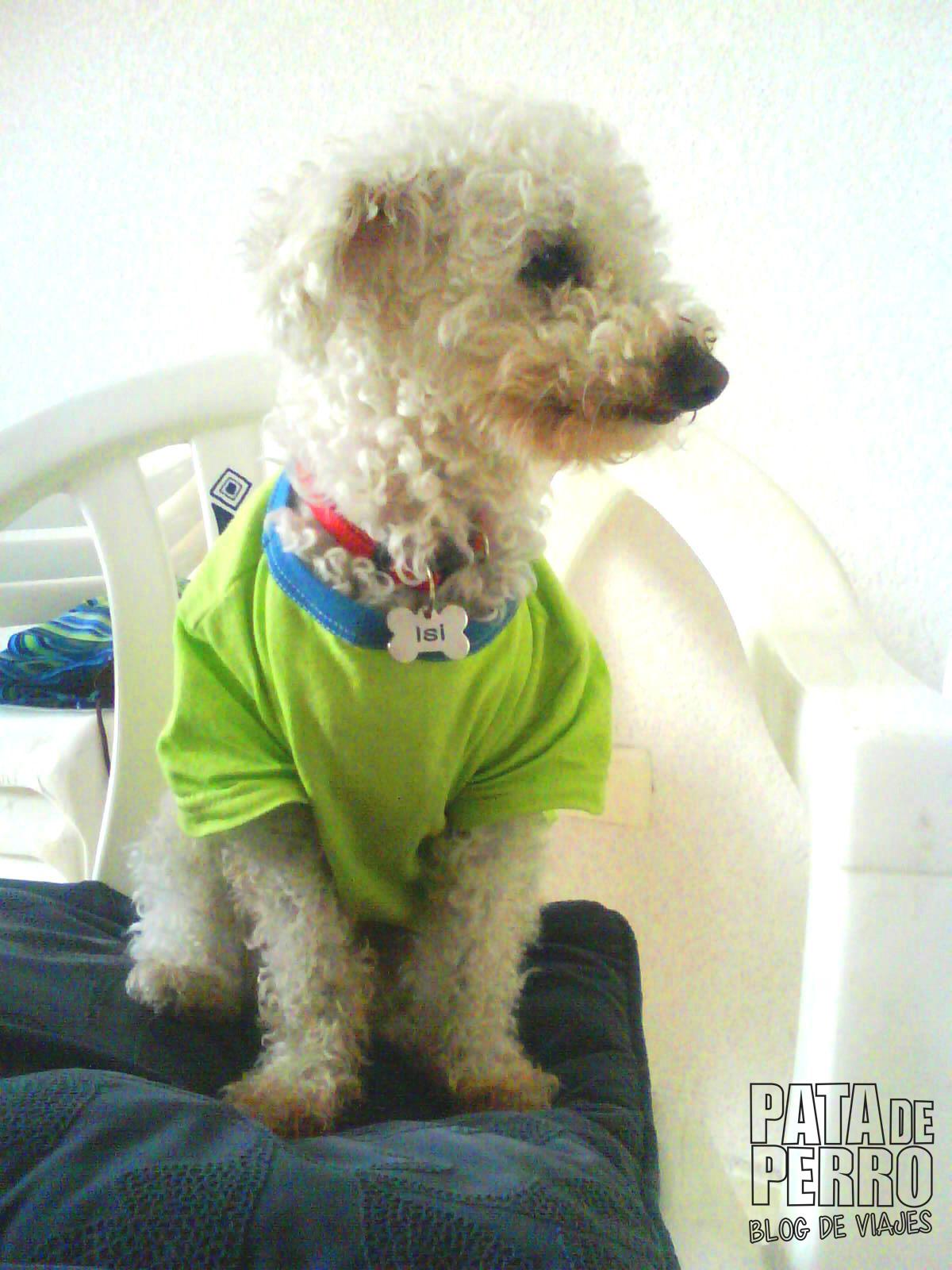 servicios funerarios para perros puebla mexico memorial friends pata de perro blog de viajes12