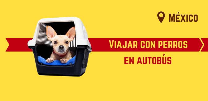 Viajar con perros en autobús en México