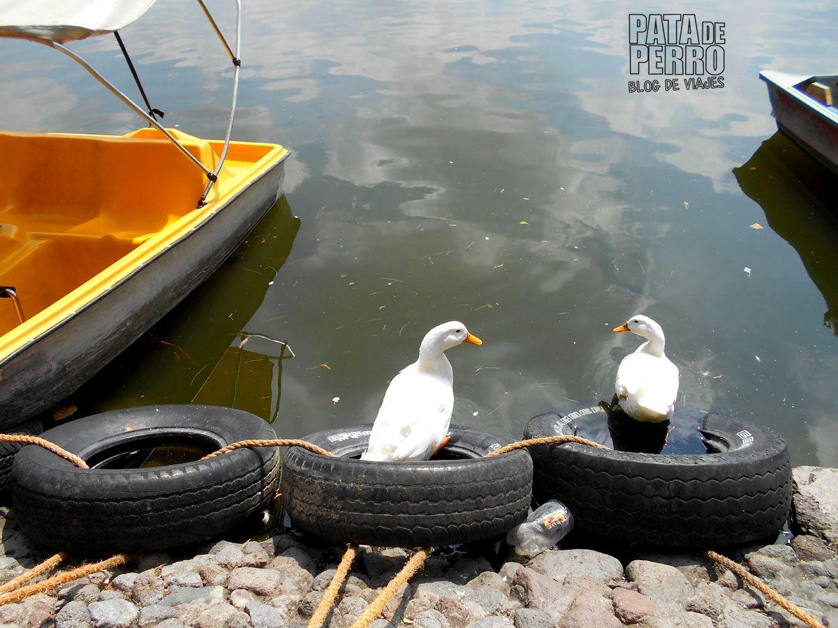 laguna-de-san-baltazar-puebla-mexico-pata-de-perro-blog-de-viajes05