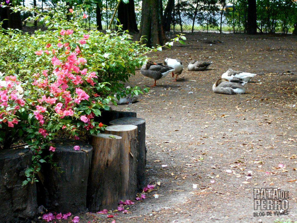 laguna-de-san-baltazar-puebla-mexico-pata-de-perro-blog-de-viajes15
