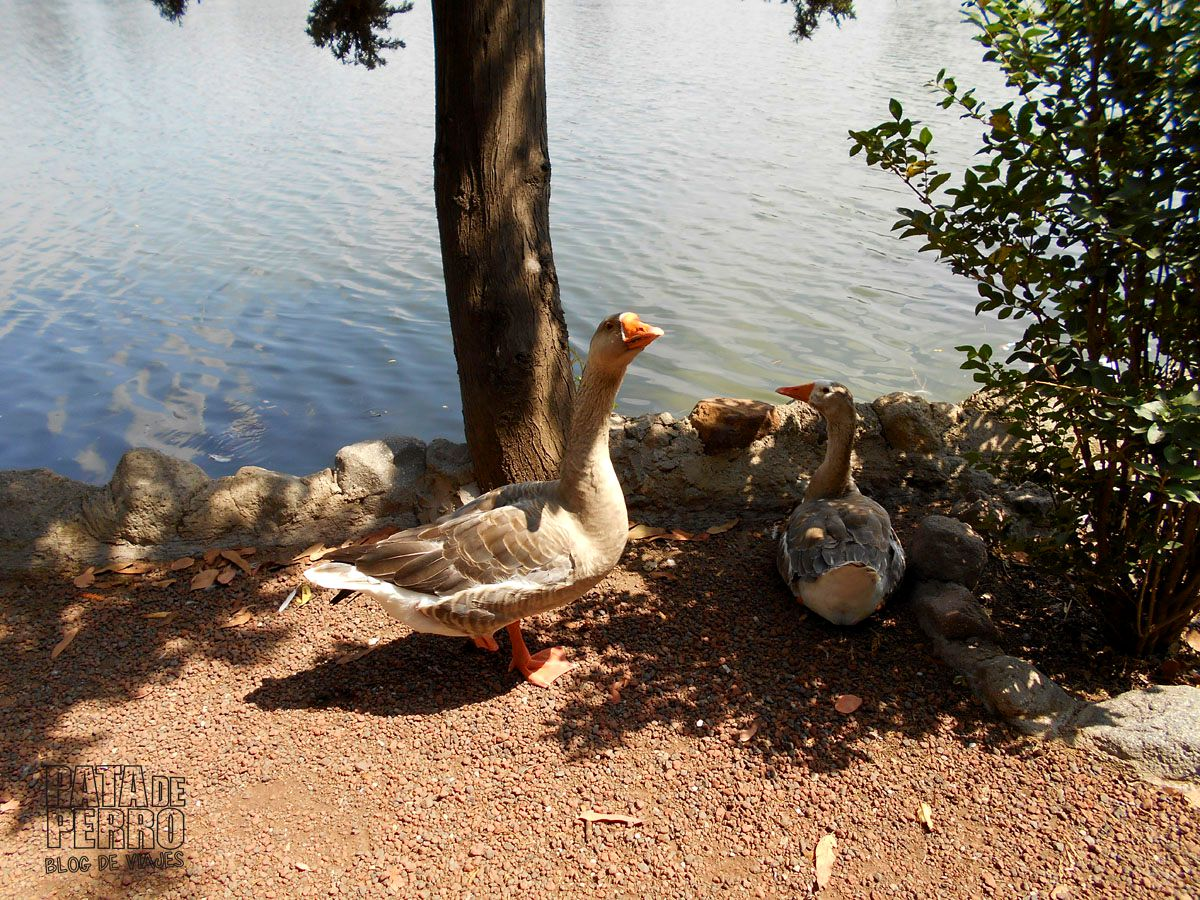 laguna-de-san-baltazar-puebla-mexico-pata-de-perro-blog-de-viajes16