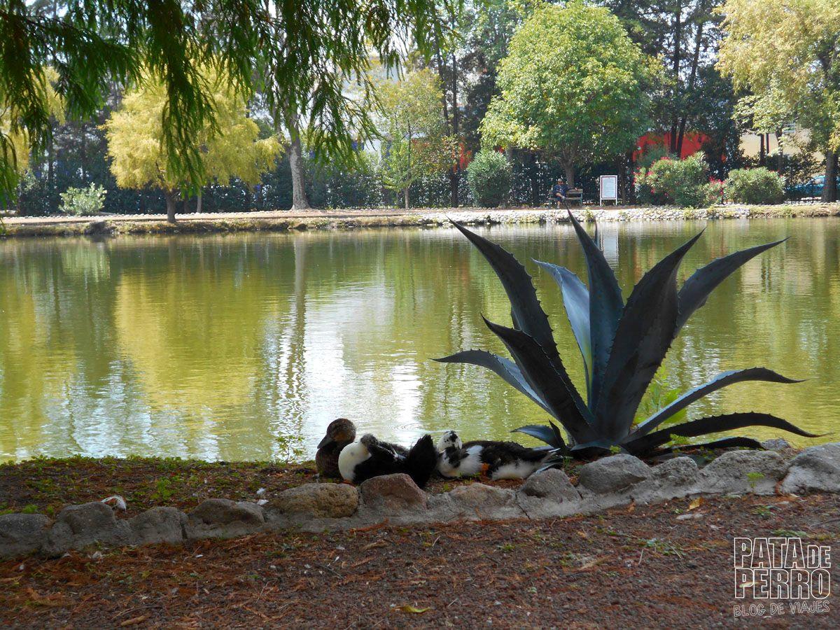 laguna-de-san-baltazar-puebla-mexico-pata-de-perro-blog-de-viajes25