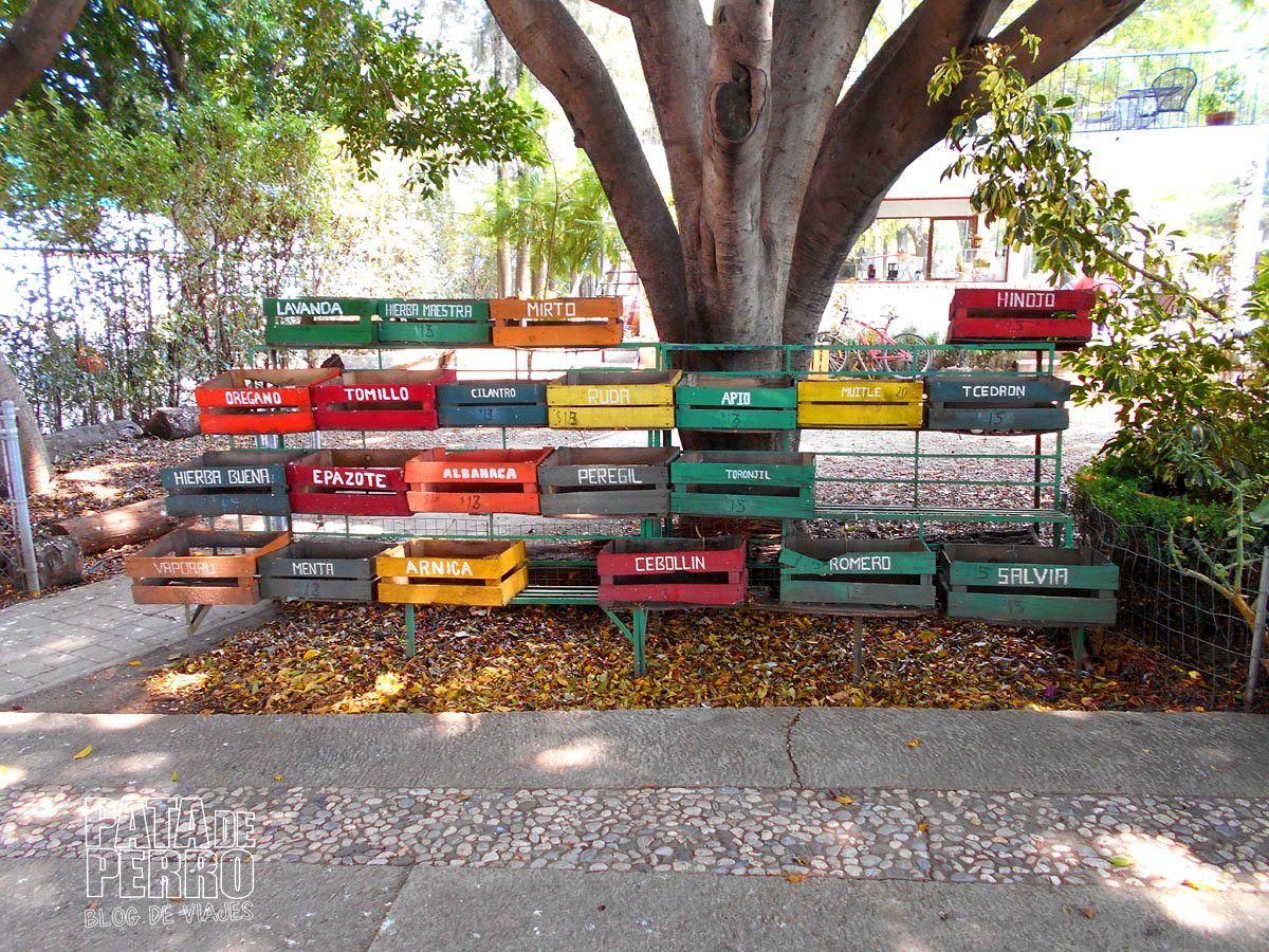 laguna-de-san-baltazar-puebla-mexico-pata-de-perro-blog-de-viajes30