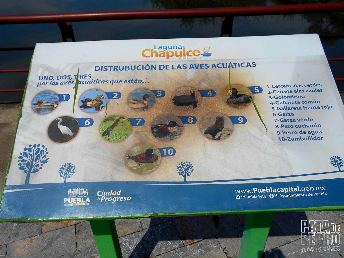 laguna-de-chapulco-puebla-mexico-pata-de-perro-blog-de-viajes33