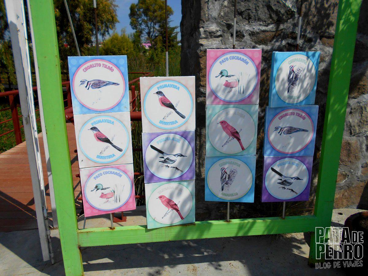 laguna-de-chapulco-puebla-mexico-pata-de-perro-blog-de-viajes34