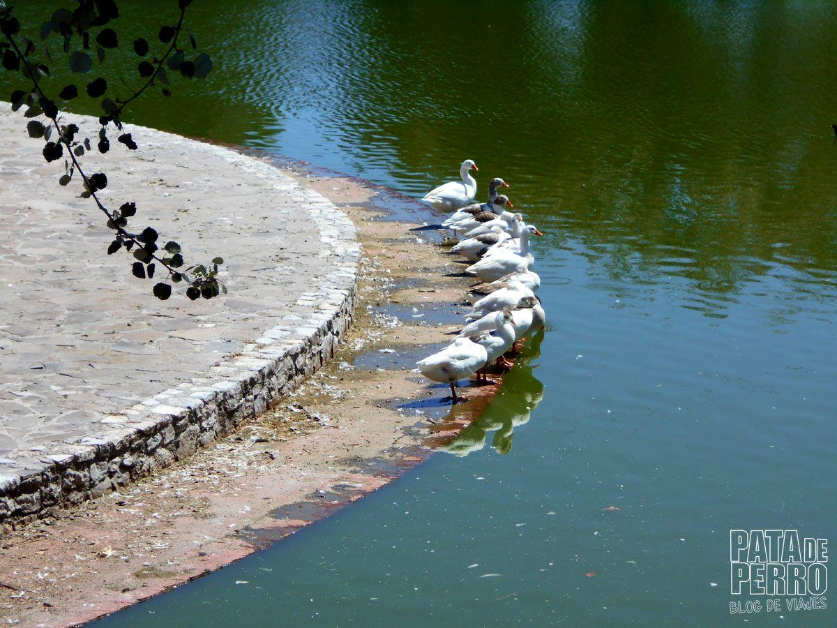 parque-ecologico-puebla-mexico-pata-de-perro-blog-de-viajes17