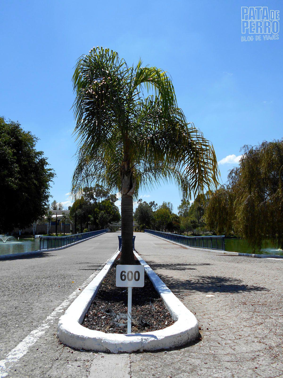 parque-ecologico-puebla-mexico-pata-de-perro-blog-de-viajes21
