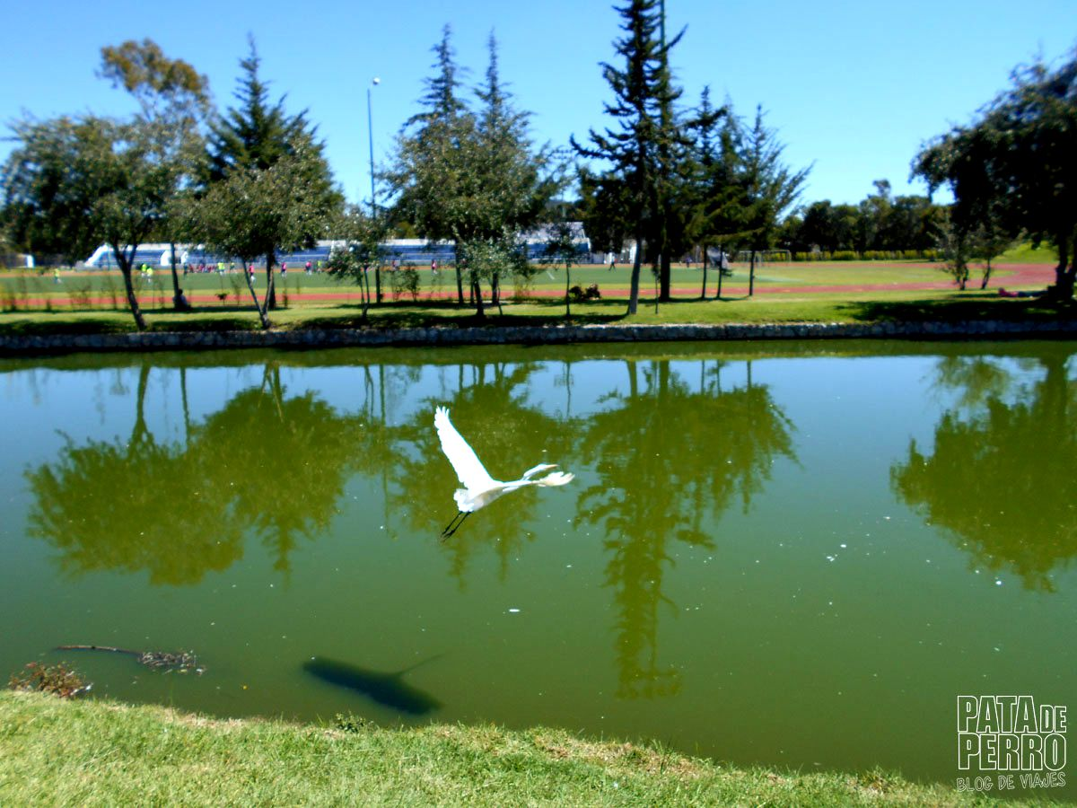 parque-ecologico-puebla-mexico-pata-de-perro-blog-de-viajes25