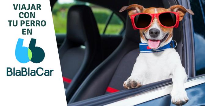 Viajar con tu perro en BlaBlaCar