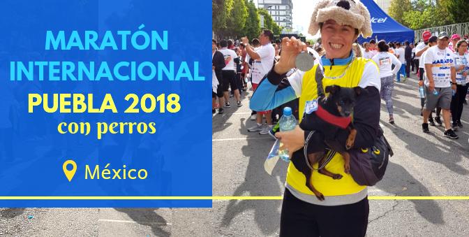 Maratón Internacional Puebla 2018 con perros