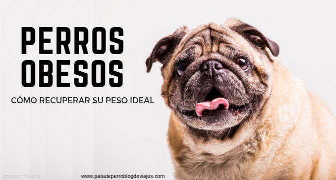 Perros obesos: cómo recuperar su peso ideal