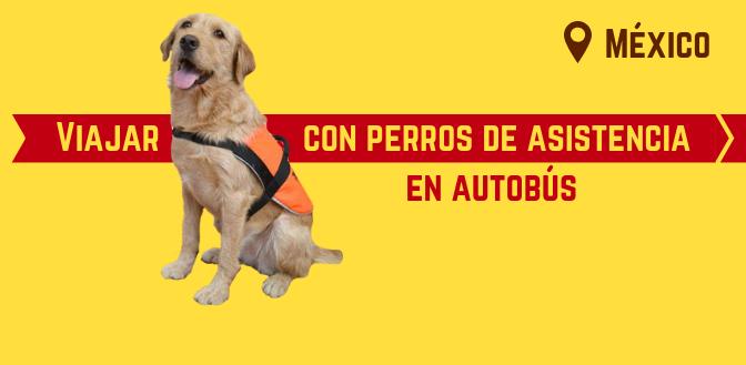 Viajar con perros de asistencia en autobús