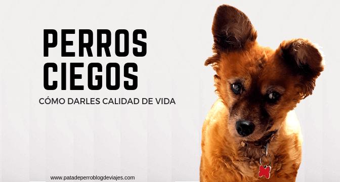 Perros ciegos: cómo darles calidad de vida