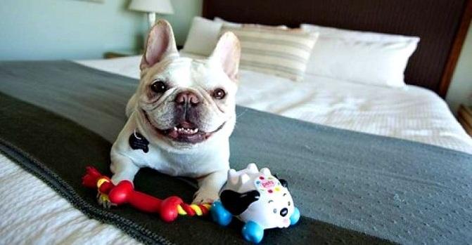 Hoteles Dog-Friendly